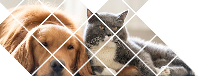 Pet Insurance